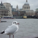 Random seagull & St pauls