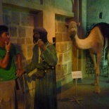 Sir 10,000 AED for the Camel? Mmmm