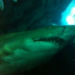 Blury shark is blury!