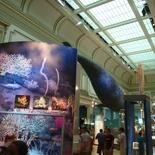 Overview of the ocean gallery