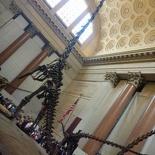 Dinosaurs!
