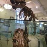 Hey a T-Rex!