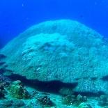 Dayang scuba gilldivers 2015 17