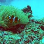Dayang scuba gilldivers 2015 19