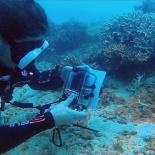 Dayang scuba gilldivers 2015 33