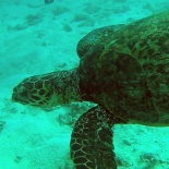 Dayang scuba gilldivers 2015 35