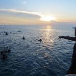 Dayang scuba gilldivers 2015 57