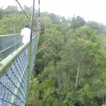 HSBC TreeTop Walk 32