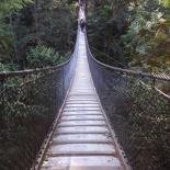 lynn valley park 12