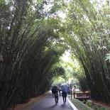 chengdu panda research 105