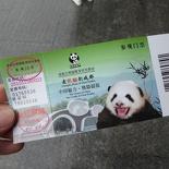 chengdu panda research 002