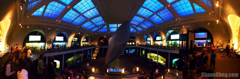 sc ny natural history museum milstein hall