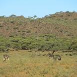 safrica-mokala-safari-026