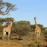 safrica-mokala-safari-045
