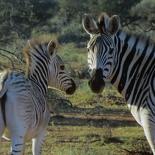 safrica-mokala-safari-054