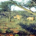 safrica-mokala-safari-060