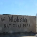 safrica-mokala-safari-001