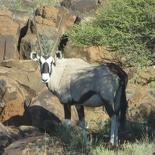 safrica-mokala-safari-002