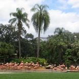 busch-gardens-tampa-027
