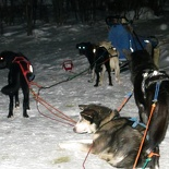 norway-tromso-husky-sledding-021