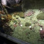 norway-tromso-polaria-aquarium-013