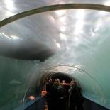 norway-tromso-polaria-aquarium-023