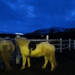 iceland-horse-ride-011
