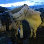 iceland-horse-ride-027