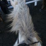iceland-horse-ride-033
