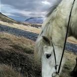 iceland-horse-ride-069