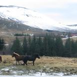 iceland-horse-ride-079