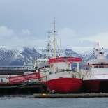 iceland-whale-watching-009