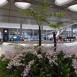 changi-terminal4-t4-018