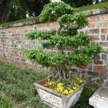hanoi-confucius-temple-literature-015