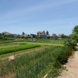 hoi-an-farm-vege-fish-043