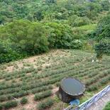 taipei-maokung-hill-gondola-tea-28