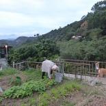 taipei-maokung-hill-gondola-tea-59