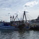 sydney-fish-market-25