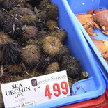 sydney-fish-market-27