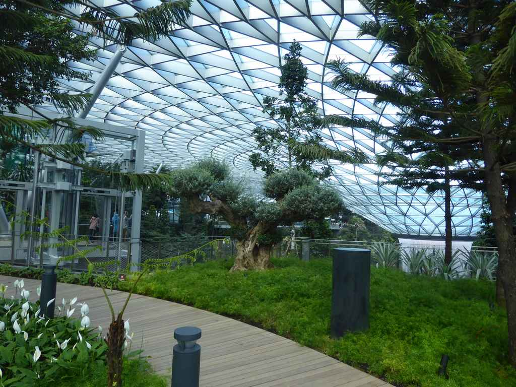 Changi Airport Jewel Rooftop Canopy Park Shaunchng Com